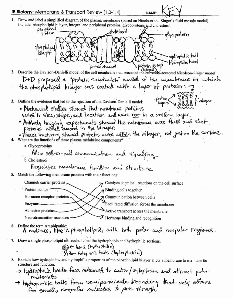 Membrane Structure and Function Worksheet Best Of Ib Cell Membrane & Transport Review Key 1 3 1 4