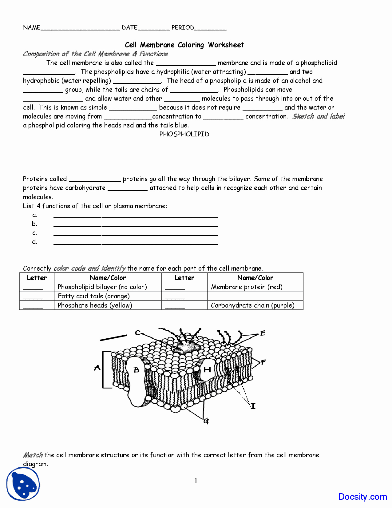 Membrane Structure and Function Worksheet Luxury Cell Membrane Coloring Application Of Biology
