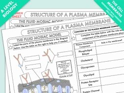 Membrane Structure and Function Worksheet New A Level Biology Cell Membrane Structure Worksheet by