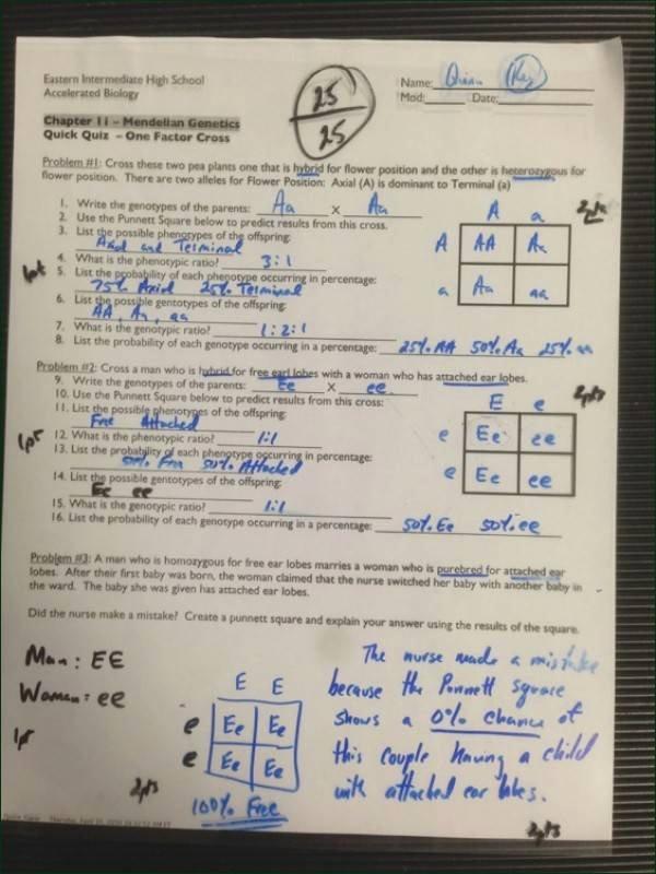 Mendelian Genetics Worksheet Answer Key Unique Mendelian Genetics Worksheet