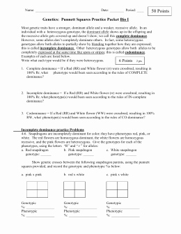 Mendelian Genetics Worksheet Answers Elegant X Linked Traits Genetics Worksheetc