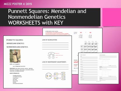 Mendelian Genetics Worksheet Answers Lovely Genetics Punnett Squares Mendel Non Mendelian Student
