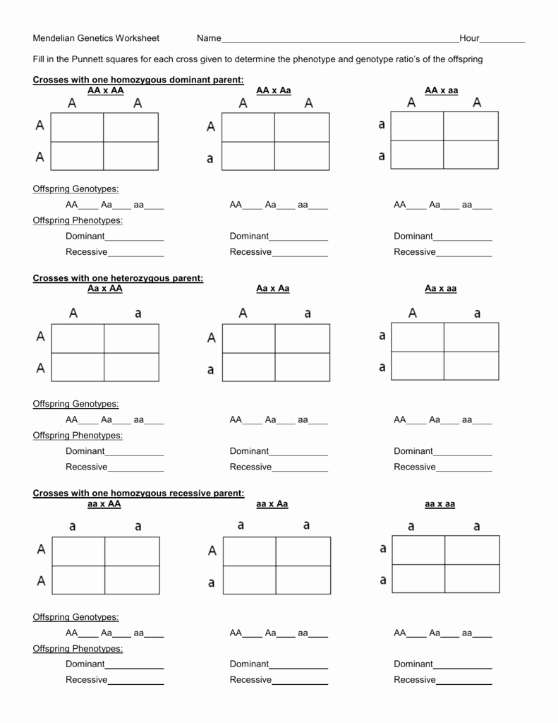 Mendelian Genetics Worksheet Answers New Punnett Square Worksheet Merrillville Munity School