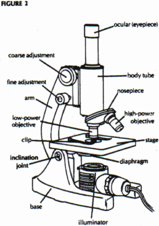 Microscope Parts and Use Worksheet New Microscope Parts and Use Worksheet Answer Key