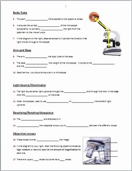 Microscope Parts and Use Worksheet New Microscope Parts Powerpoint Worksheet Editable by