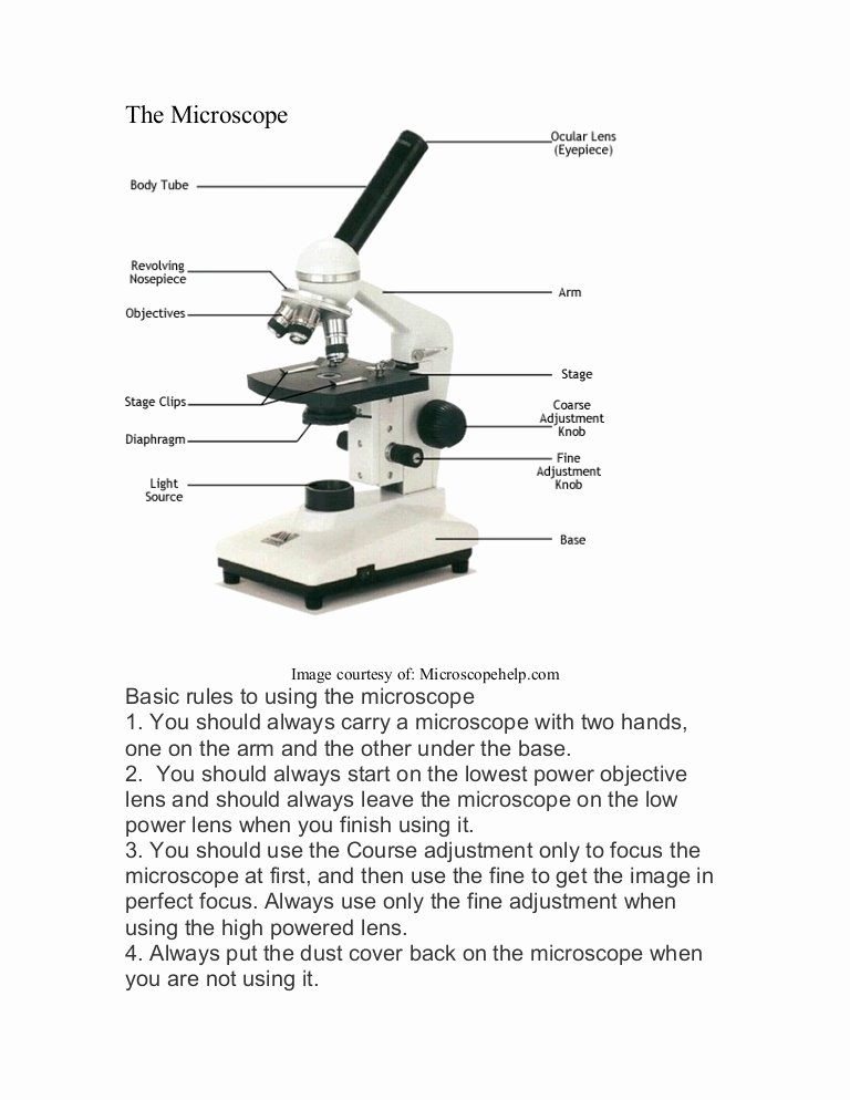Microscope Parts and Use Worksheet Unique Microscope Labeled Diagram