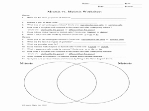 Mitosis Vs Meiosis Worksheet Answers Inspirational Mitosis Vs Meiosis Worksheet 9th 12th Grade Worksheet