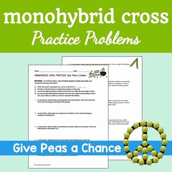 Monohybrid Cross Practice Problems Worksheet Best Of Freebie Monohybrid Cross Practice Problems Give Peas A