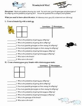 Monohybrid Cross Practice Problems Worksheet Elegant Free Genetics Worksheet Monohybrid Mice Monohybrid