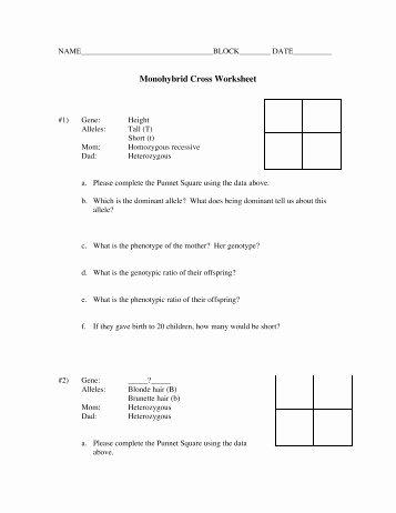 Monohybrid Cross Practice Problems Worksheet Elegant Monohybrid Crosses Story Problems