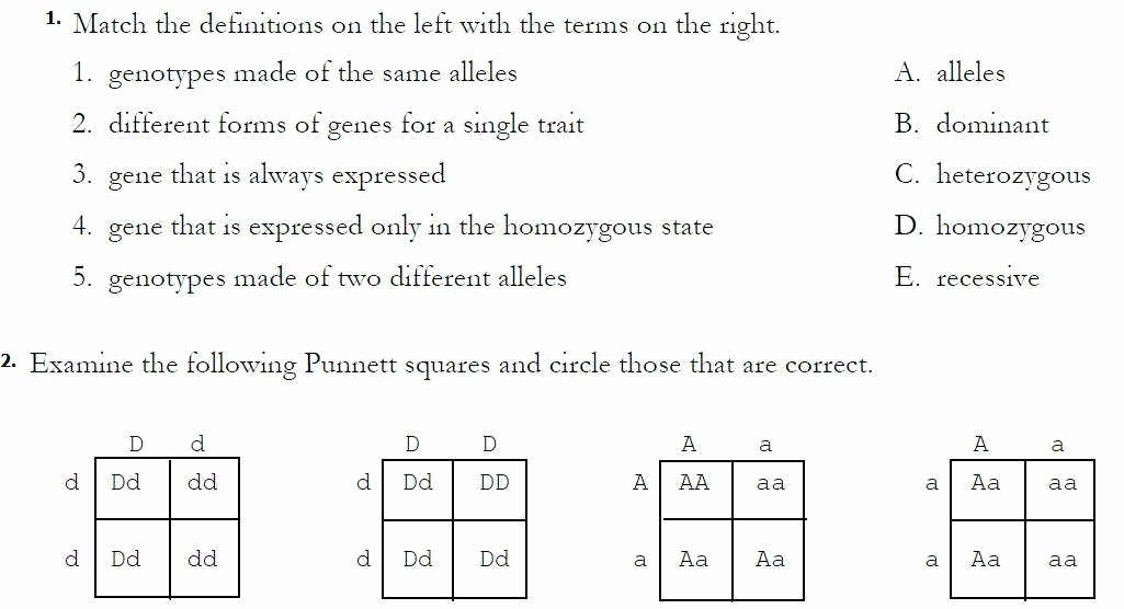 Monohybrid Cross Worksheet Answers Awesome Dihybrid Cross Worksheet Answers