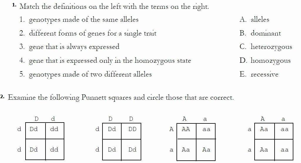 Monohybrid Cross Worksheet Answers Awesome Dihybrid Cross Worksheet Answers