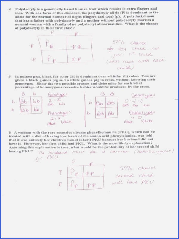 Monohybrid Cross Worksheet Answers Elegant Chapter 10 Dihybrid Cross Worksheet Answer Key
