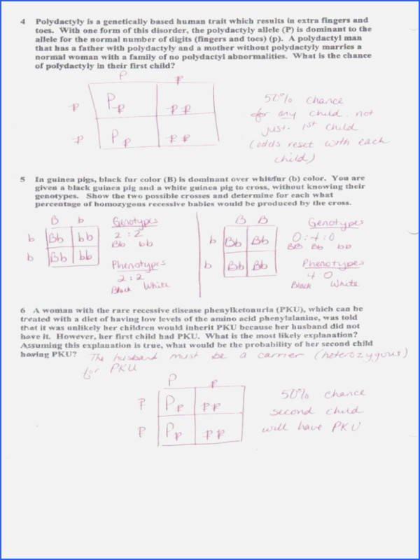 Monohybrid Cross Worksheet Answers Elegant Chapter 10 Dihybrid Cross Worksheet Answer Key