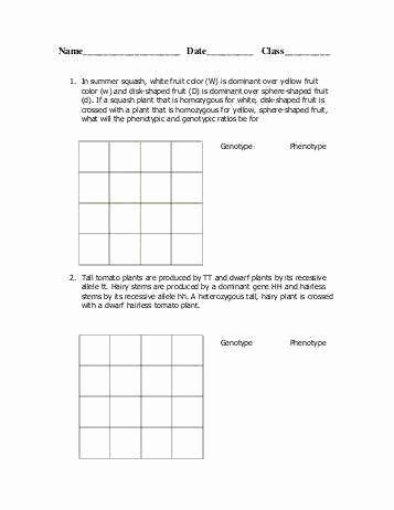 Monohybrid Cross Worksheet Answers Elegant Dihybrid Cross Worksheet Answers