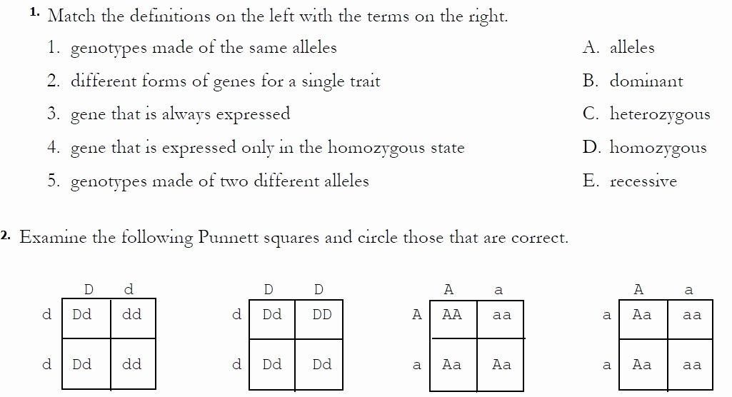 Monohybrid Cross Worksheet Answers Fresh Monohybrid Crosses