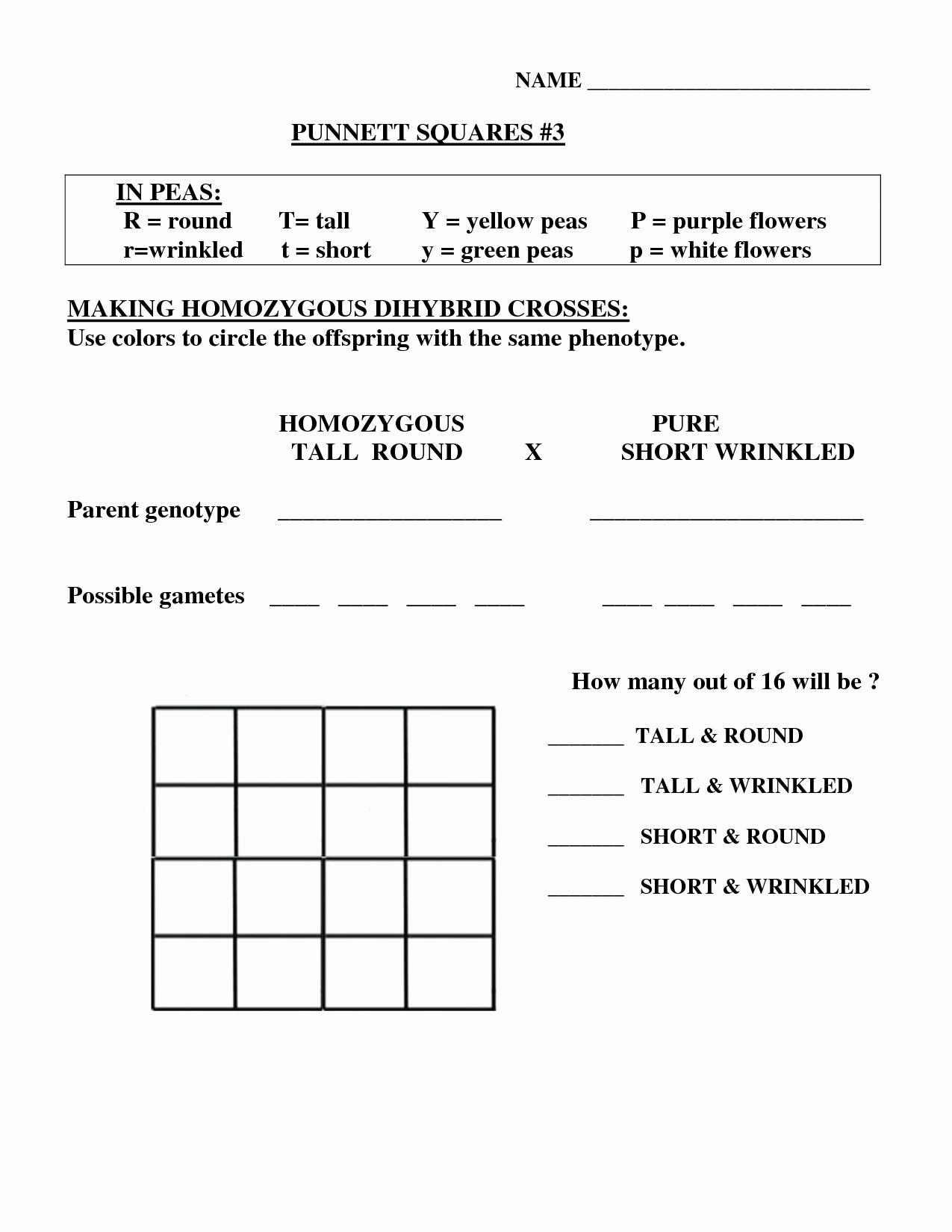 Monohybrid Cross Worksheet Answers Lovely 15 Best Of Dihybrid Cross Worksheet Answers