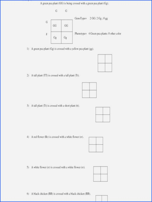 Monohybrid Crosses Worksheet Answers Beautiful Chapter 10 Dihybrid Cross Worksheet Answer Key