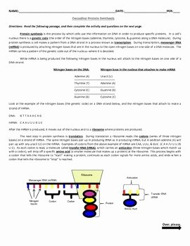 Mutations Worksheet Answer Key Inspirational Decoding Protein Synthesis & Decoding Mutations Activities