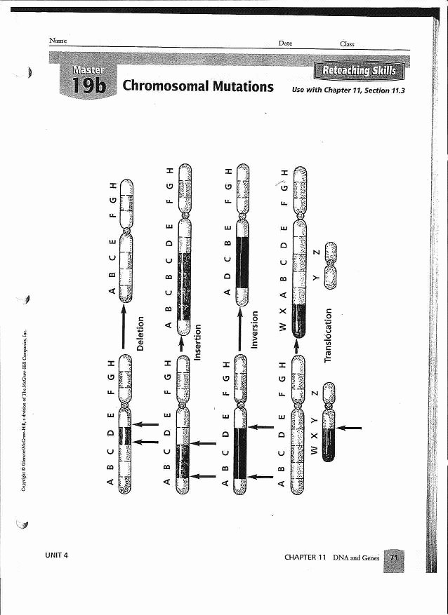 Mutations Worksheet Answer Key Lovely 12 Best Of Gene and Chromosome Mutation Worksheet