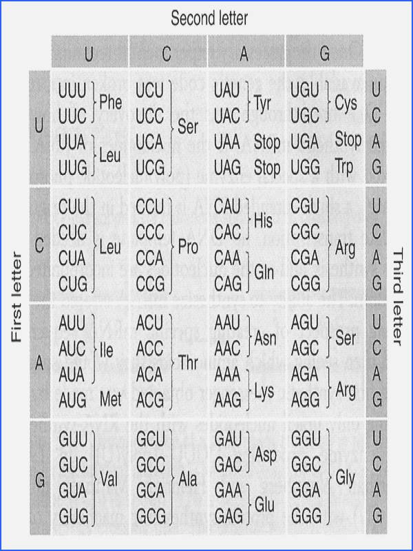 Mutations Worksheet Answer Key Lovely Gene Mutations Worksheet Answers