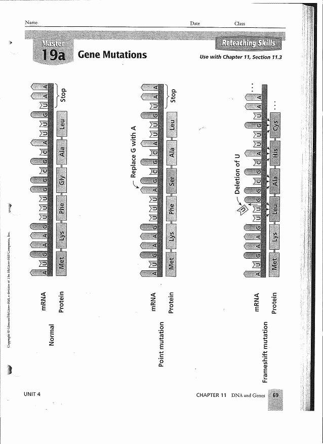 Mutations Worksheet Answer Key Unique 53 Gene Mutations Worksheet Chromosome Mutation Worksheet