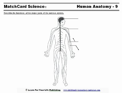 Nervous System Worksheet High School Awesome Human Body for Kids