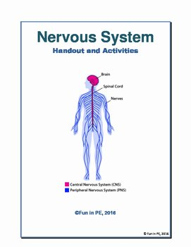 Nervous System Worksheet High School Beautiful Nervous System Entire Unit No Prep Notes Worksheets
