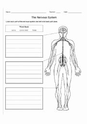 Nervous System Worksheet High School Fresh English Teaching Worksheets Nervous System
