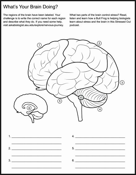 Nervous System Worksheet High School Luxury Chsh Teach Brain Nervous System Neuroscience Teaching