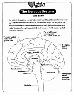 Nervous System Worksheet High School Luxury Labeling Parts A Microscope Worksheet Parts Of A