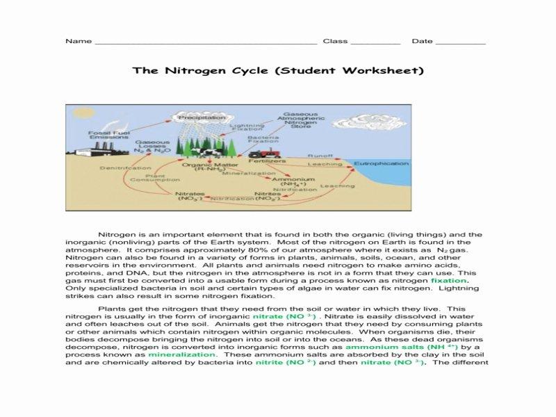 Nitrogen Cycle Worksheet Answer Key Awesome the Nitrogen Cycle Worksheet Free Printable Worksheets