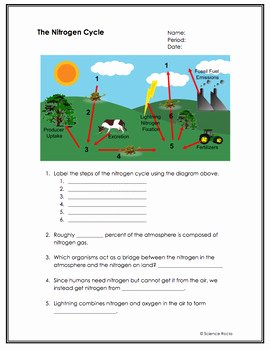 Nitrogen Cycle Worksheet Answer Key Elegant Biogeochemical Cycles Worksheets by Science Lessons that