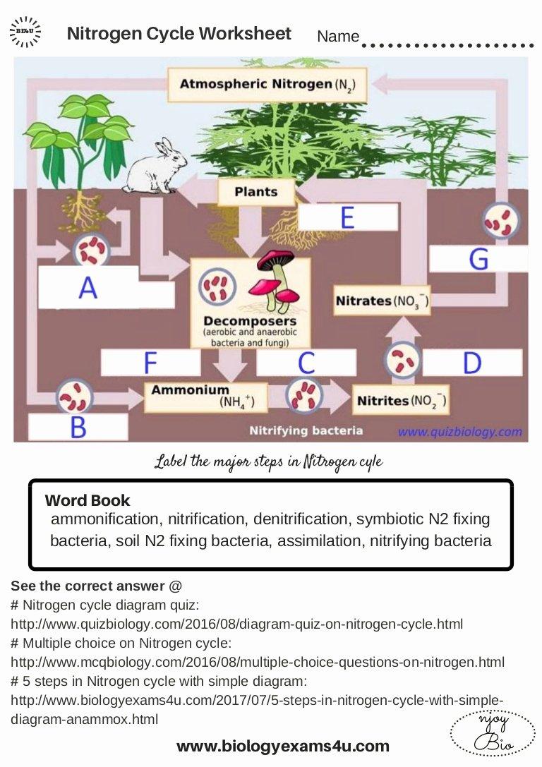 Nitrogen Cycle Worksheet Answer Key Fresh the Nitrogen Cycle Worksheet