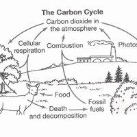 Nitrogen Cycle Worksheet Answer Key Lovely Reading Prehension Worksheets 7th Grade