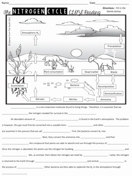 Nitrogen Cycle Worksheet Answers Elegant Nitrogen Cycle Diagram Worksheet 2019