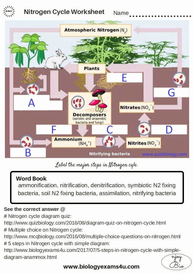 Nitrogen Cycle Worksheet Answers Lovely Nitrogen Cycle Worksheet