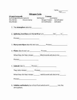 Nitrogen Cycle Worksheet Answers New Nitrogen Cycle Worksheet Answers the Best Worksheets Image