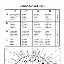 Nucleic Acid Worksheet Answers Lovely Nucleic Acids Review Worksheet Biology with Mrs Sims at
