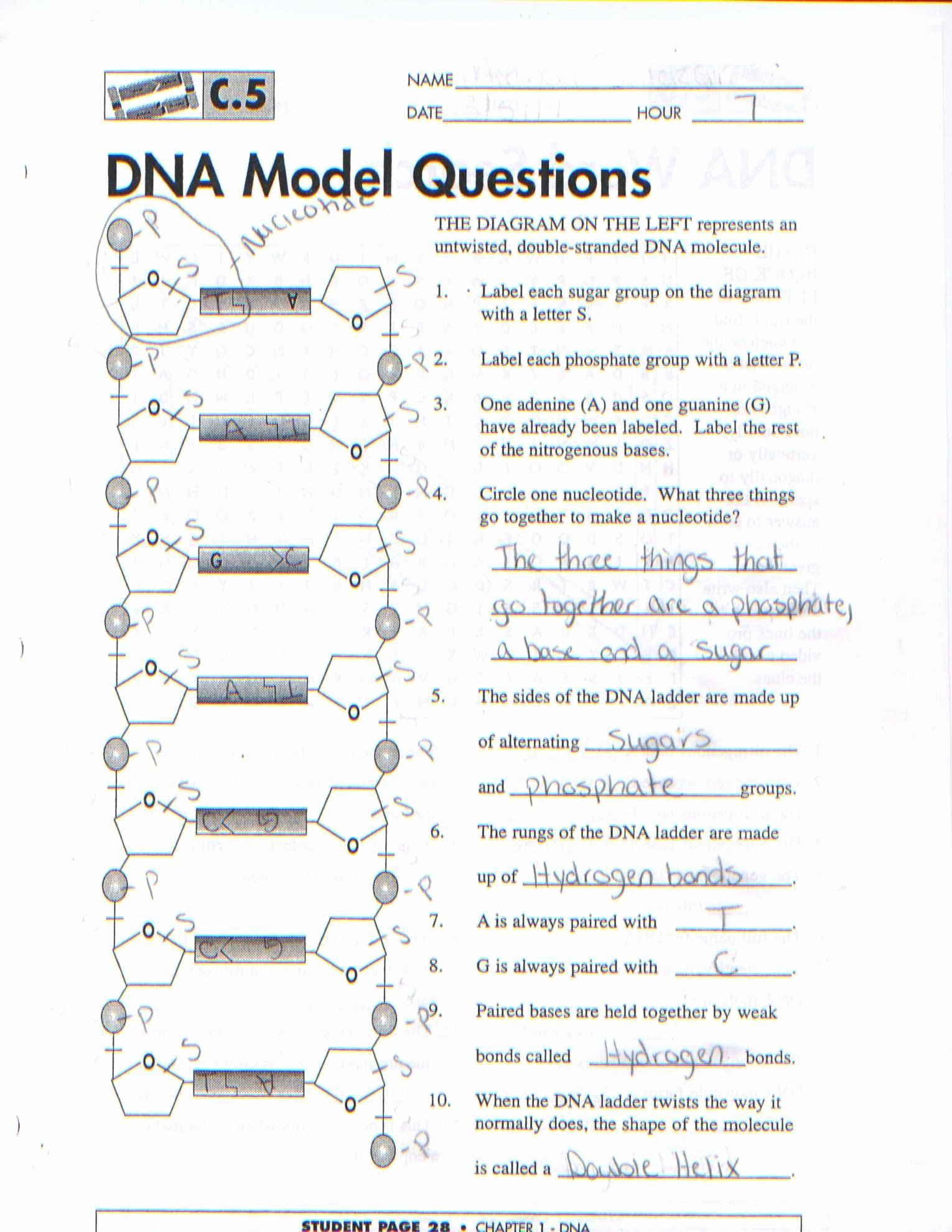 Nucleic Acids Worksheet Answers Inspirational atomic Structure Review Worksheet Answer Key