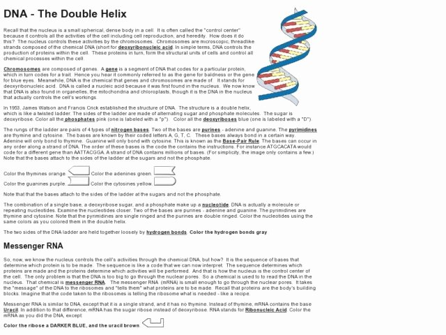 Nucleic Acids Worksheet Answers Inspirational Nucleic Acids Dna the Double Helix Worksheet Answers the