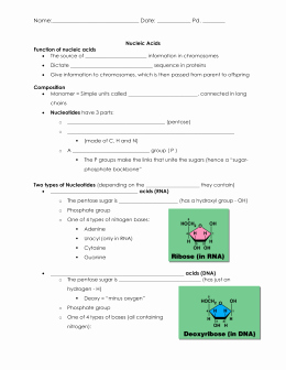 Nucleic Acids Worksheet Answers Luxury Answer Key Biology 1 Unit 2 A Dna Mastery Unit – Worksheet