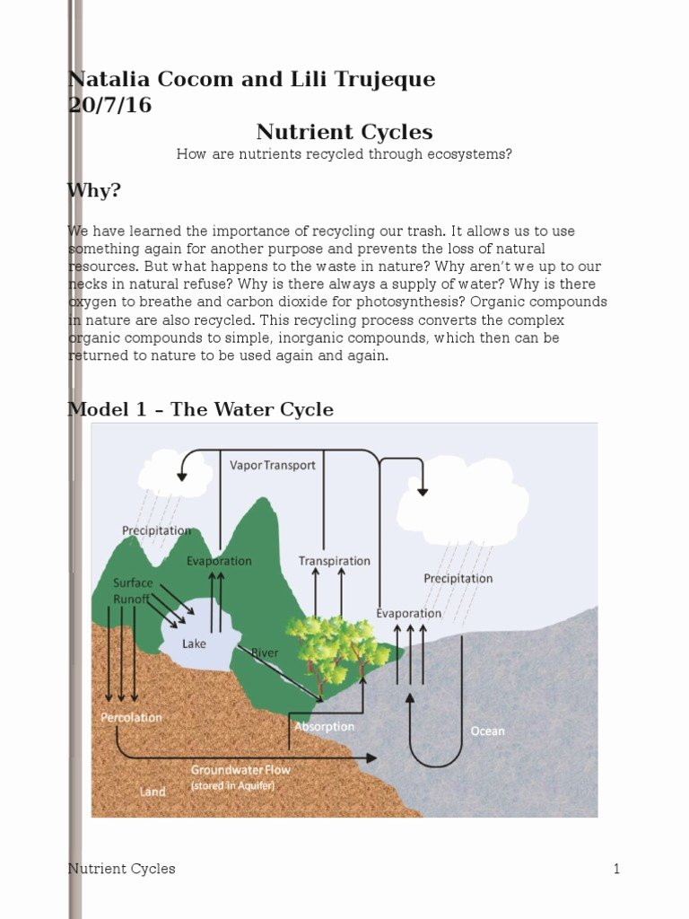 Nutrient Cycles Worksheet Answers Beautiful Nutrient Cycles Pogil Natalia Carbon Dioxide