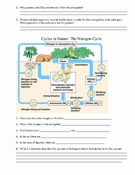 Nutrient Cycles Worksheet Answers New Worksheet Nutrient Cycles by Chemistrycat