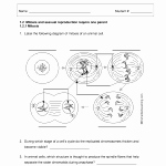 Onion Cell Mitosis Worksheet Answers Fresh Ion Cell Mitosis Worksheet Answers Root Tip Biology