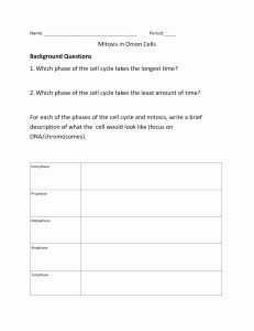 Onion Cell Mitosis Worksheet Answers Luxury Ion Root Tip Mitosis Lab