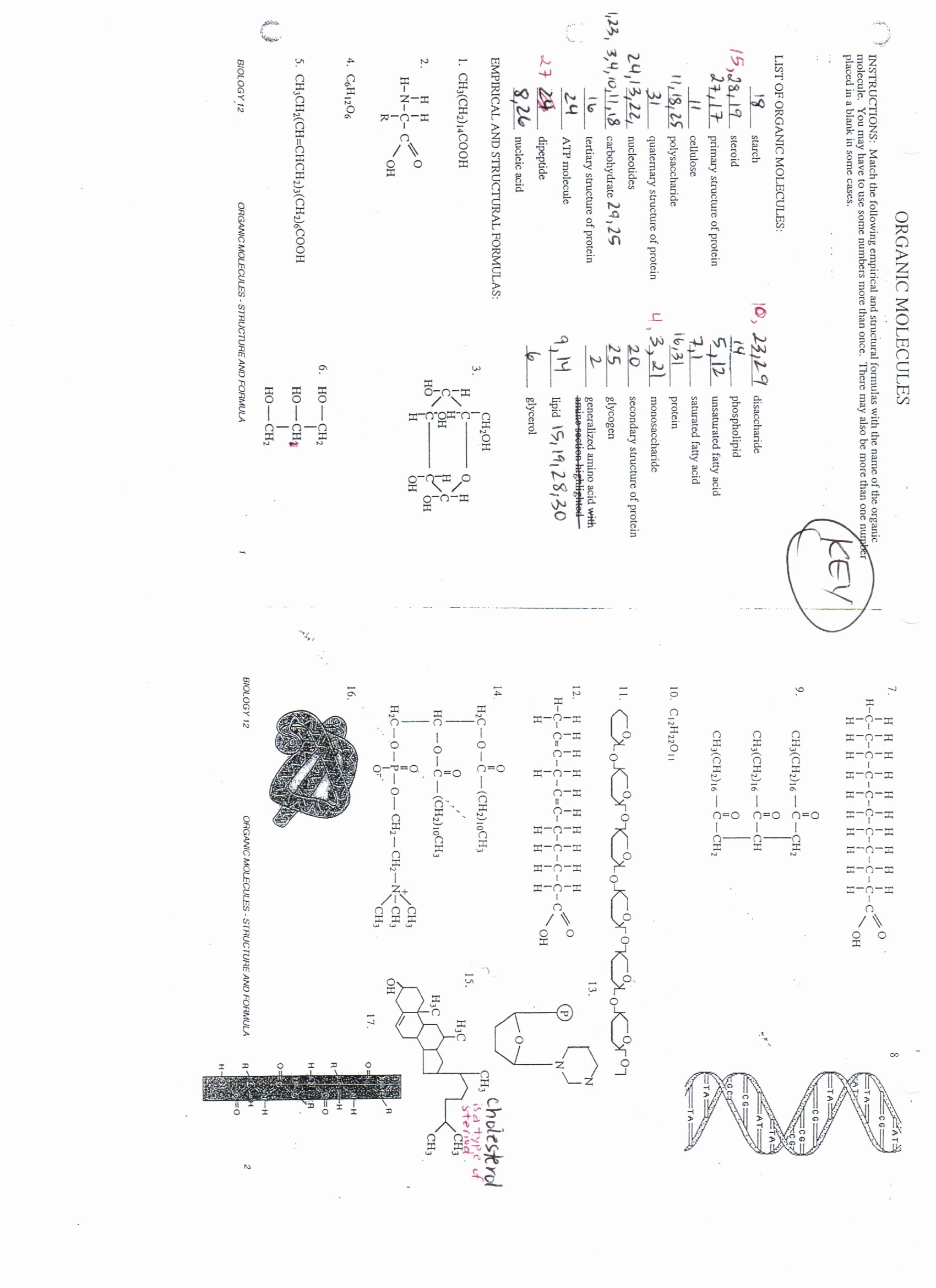 Organic Molecules Worksheet Answer Key Lovely Answers Lipids Nucleic Acids and organic Molecules
