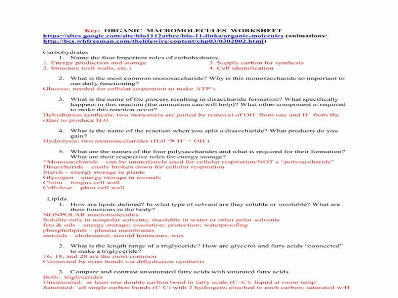 Organic Molecules Worksheet Answer Key New Macromolecules Worksheet