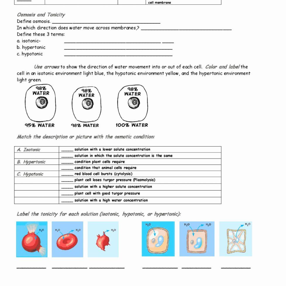 Osmosis and tonicity Worksheet Lovely Osmosis and tonicity Worksheet Answers