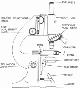 Parts Of A Microscope Worksheet Awesome the Journal Of Nadirsky Parts Of Microscope Biology Lesson
